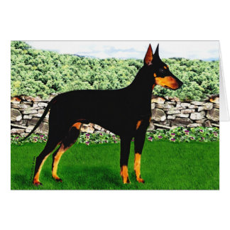 Cartão de Manchester Terrier