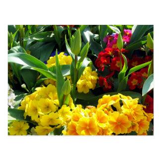 Cartão de Medly da flor