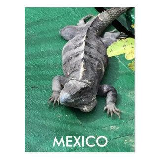 Cartão de México
