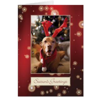 Cartão de Natal 008 de Vizsla do Hungarian