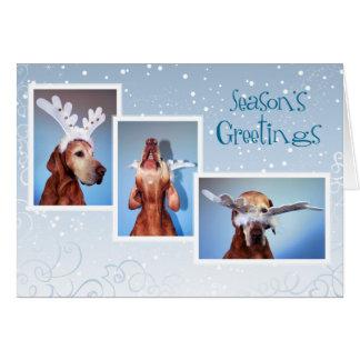 Cartão de Natal 011 de Vizsla do Hungarian