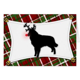 Cartão de Natal da rena de Tervuren do belga