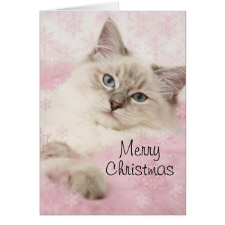 Cartão de Natal de Ragdoll