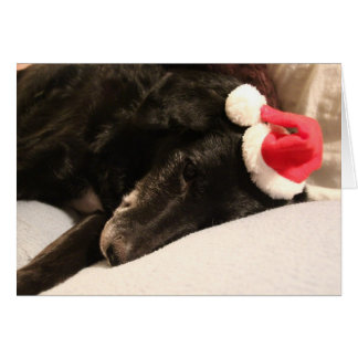 Cartão de Natal do cão do salvamento