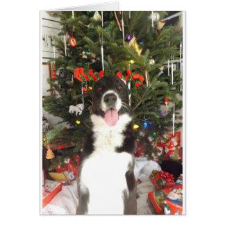 Cartão de Natal do cão dos Antlers da rena