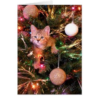 Cartão de Natal do gatinho de Bob do duende