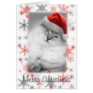 cartão de Natal do gatinho do papai noel