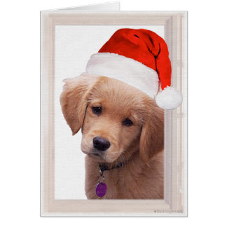 Cartão de Natal do golden retriever