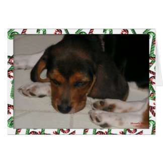 Cartão de Natal do lebreiro (sonolento)