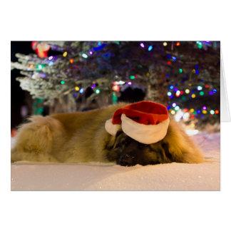 Cartão de Natal do sono Leonberger