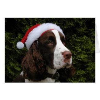 Cartão de Natal do Spaniel de Springer do Natal