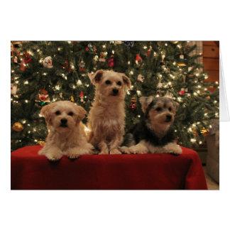 Cartão de Natal do trio do filhote de cachorro