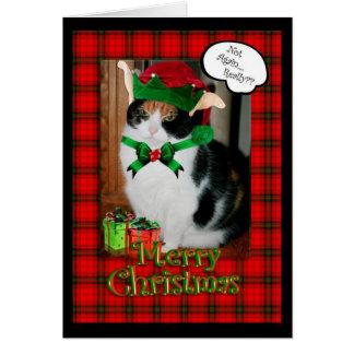 Cartão de Natal engraçado, gato mal-humorado