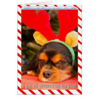 Cartão de Natal furado de Raindeer do Spaniel de