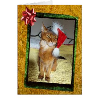 Cartão de Natal impertinente do gatinho