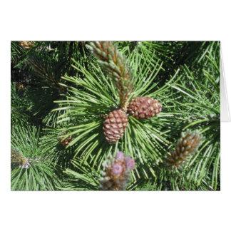 Cartão de Natal Longo-Needled do pinho