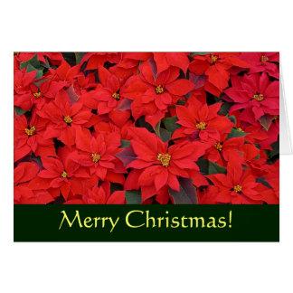Cartão Cartão de Natal vermelho das poinsétias (vazio