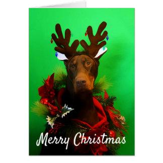 Cartão de Natal vermelho do Doberman