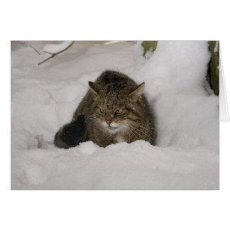Cartão de Natal - wildcat escocês