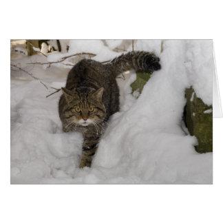 Cartão de Natal - wildcat escocês 4