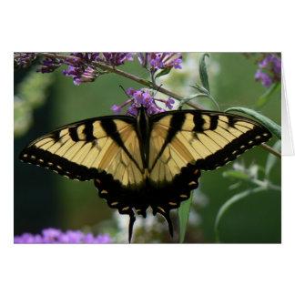 Cartão de nota bonito da borboleta, envelopes