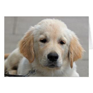 Cartão de nota bonito da foto do cão de filhote de