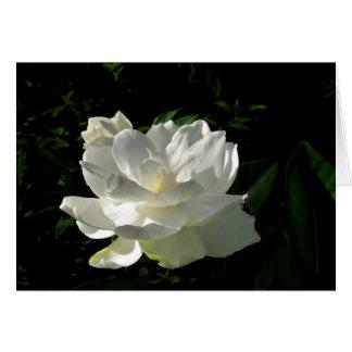 Cartão de nota branco da flor do Gardenia