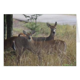 Cartão de nota - cervo - pares curiosos