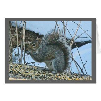 Cartão de nota cinzento do esquilo