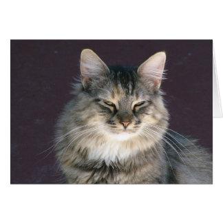 Cartão de nota cinzento do gato de gato malhado