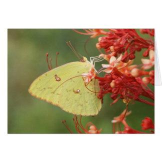 Cartão de nota Cloudless da borboleta de enxofre