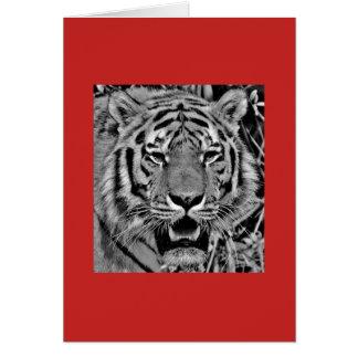 Cartão de nota com o tigre no fundo vermelho