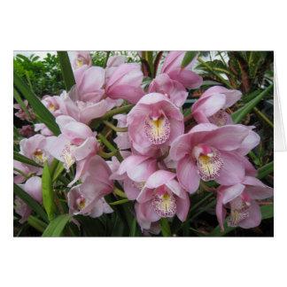 Cartão de nota cor-de-rosa da orquídea