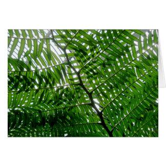 Cartão de nota da árvore da samambaia