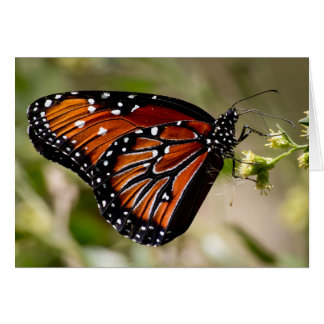 Cartão de nota da borboleta, envelopes incluídos