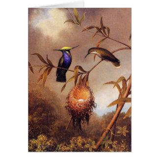Cartão de nota da família do colibri