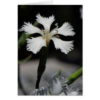 cartão de nota da flor branca