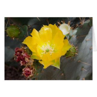 Cartão de nota da flor do cacto, envelopes