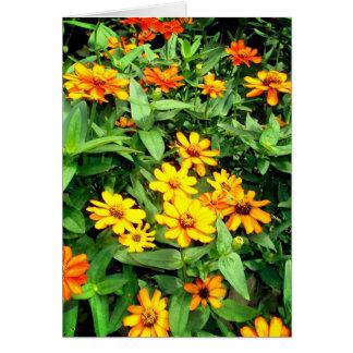 Cartão de nota da flor do Zinnia. Amarelo, laranja