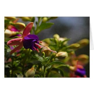 cartão de nota da flor dos fuschias