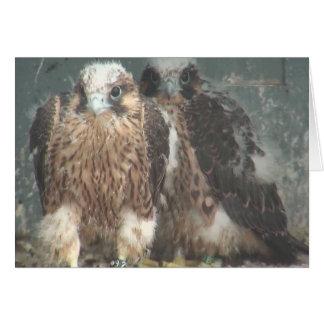 Cartão de nota do falcão