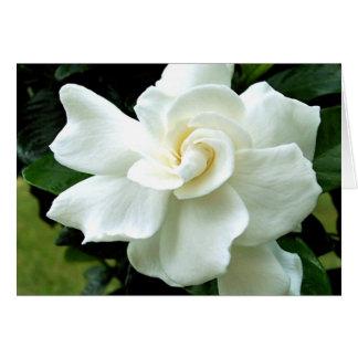 Cartão de nota do Gardenia