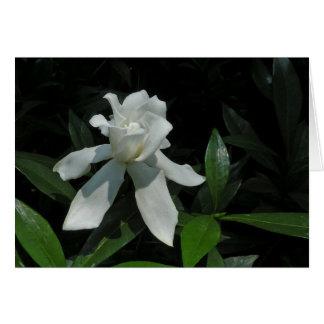 Cartão de nota do Gardenia da dança