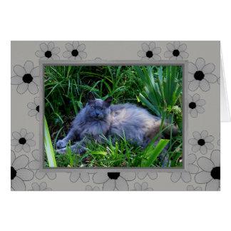 Cartão de nota do gato de racum de Maine/vazio