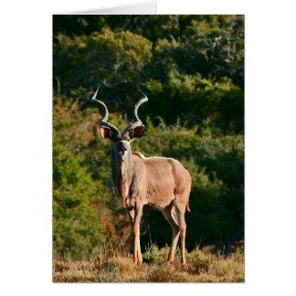 Cartão de nota do leste de Kudu do cabo
