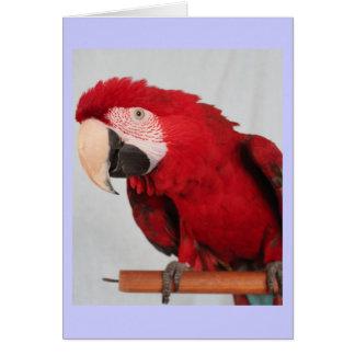 Cartão de nota do Macaw