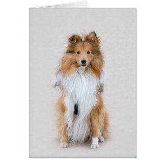 Cartão de nota do vazio do cão do sheltie do