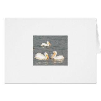 Cartão de nota dos pelicanos brancos