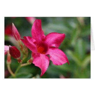 Cartão de nota floral da flor cor-de-rosa
