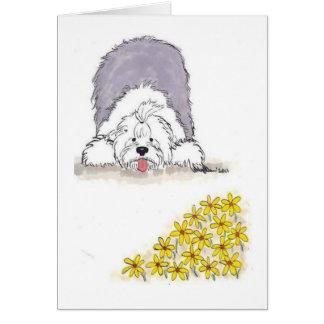Cartão de nota inglês velho do Sheepdog